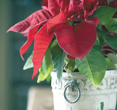 Natural ways to spread holiday cheer