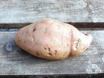 One Big Sweet Potato