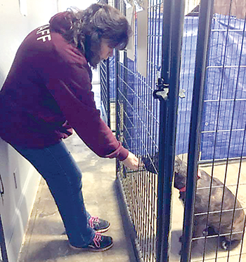 Brother Wolf provides a home for animals in need