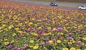 NCDOT Wildflower  Award Winners