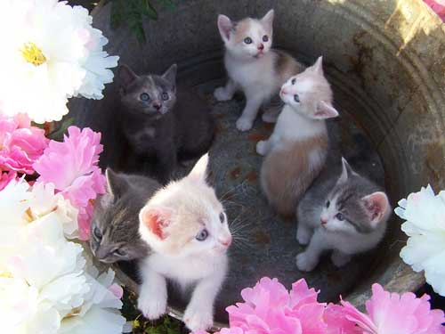 Photo Of The Day Contest!