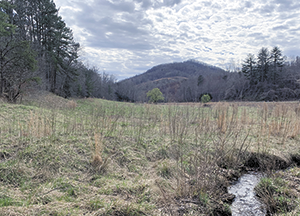 Foothills Conservancy of North Carolina protected lands grow with 90-acre donation in Burke County and 19-acre donation in McDowell County